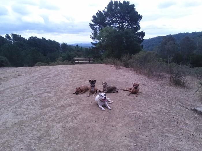 Barney, Cash, Pepa, Ani, Gwen!