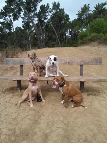Pepa, Gwen, Zawadi, and Diablo