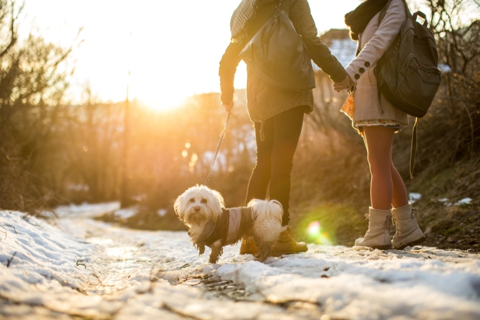 Two Girlfriends Walking Cute Dog On Sunny Winter Day